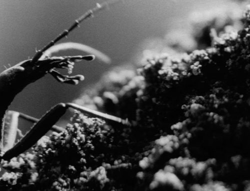The Insect Woman – 1963 Imamura
