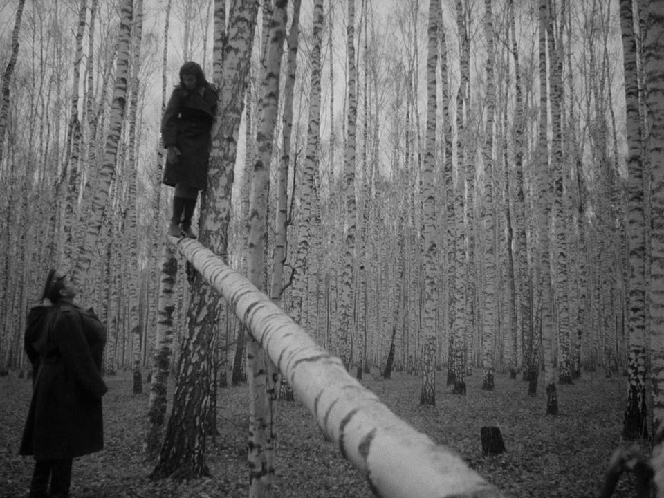 This image has an empty alt attribute; its file name is tarkovsky-ivans-childhood-trees.jpg