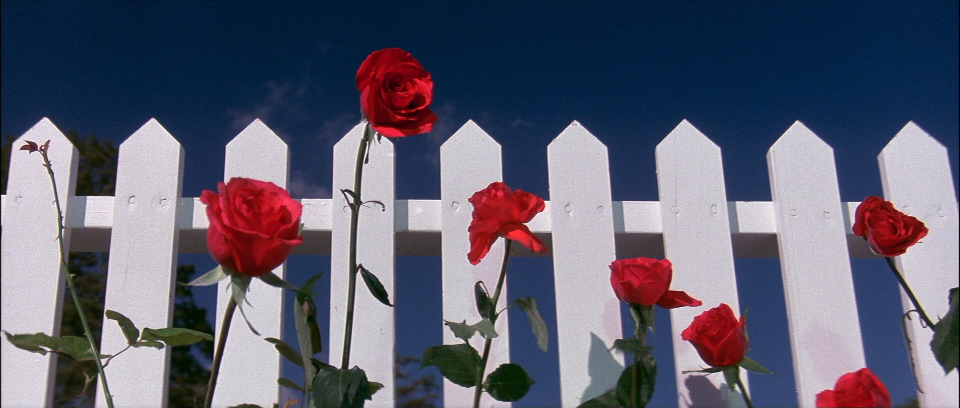 This image has an empty alt attribute; its file name is blue-velvet-roses-lynch-5.jpg